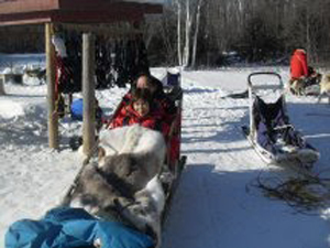 sled dog ride