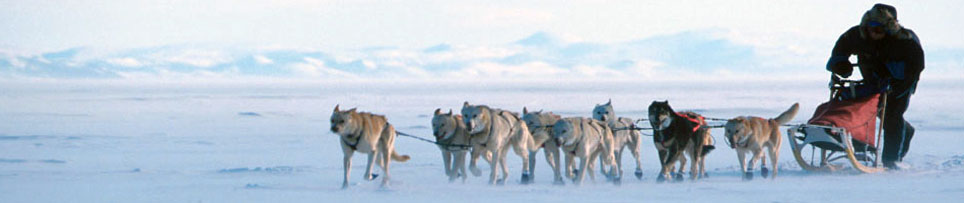 how to train a sled dog team